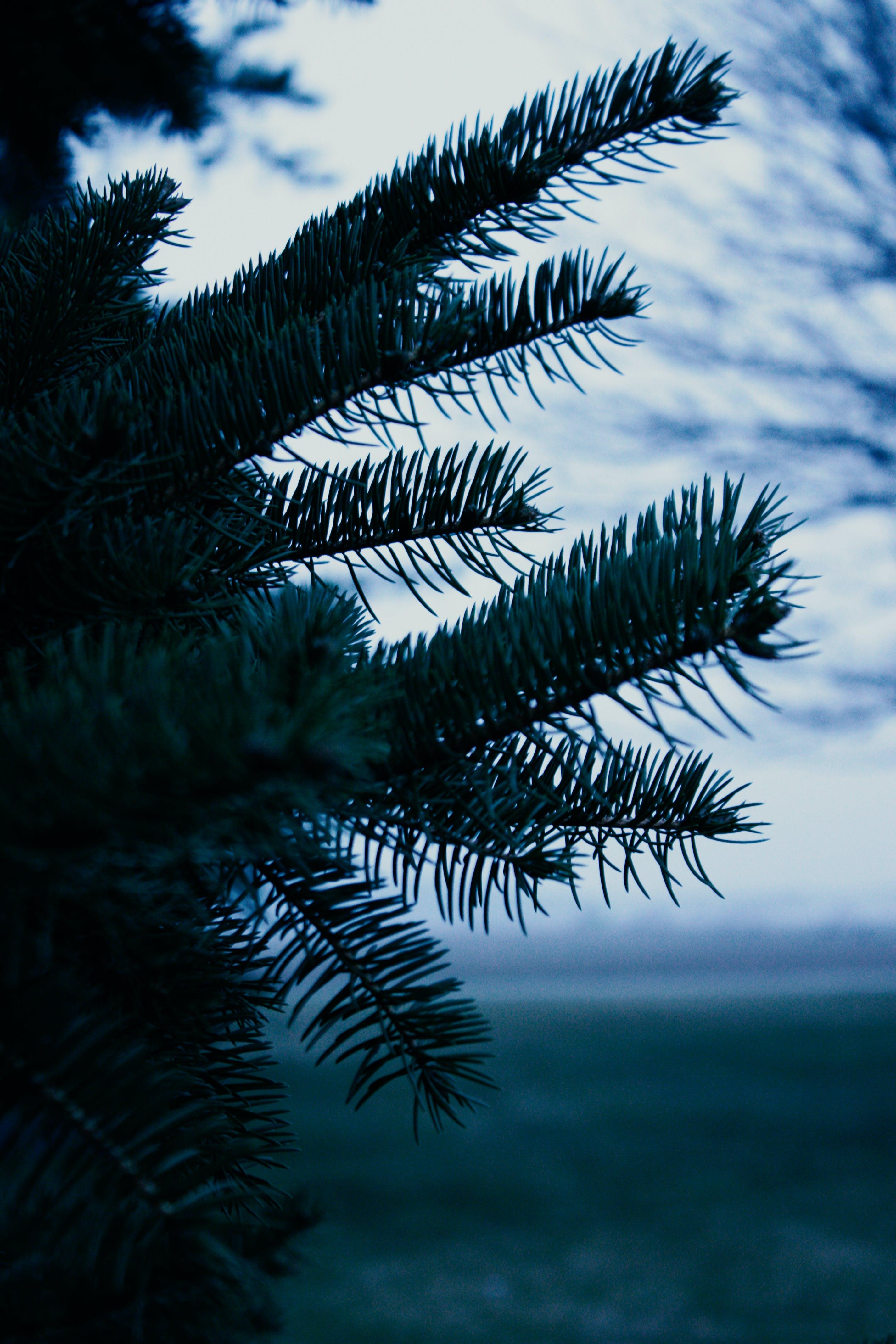 Palm Tree Close-up Photo