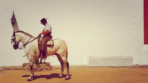 Gratis lagerfoto af atlet, fra siden, handling, kavaleri
