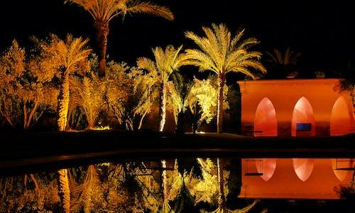 yansıma riad palmiye ağacı içeren Ücretsiz stok fotoğraf