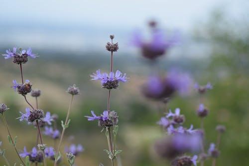 紫色の花の無料の写真素材