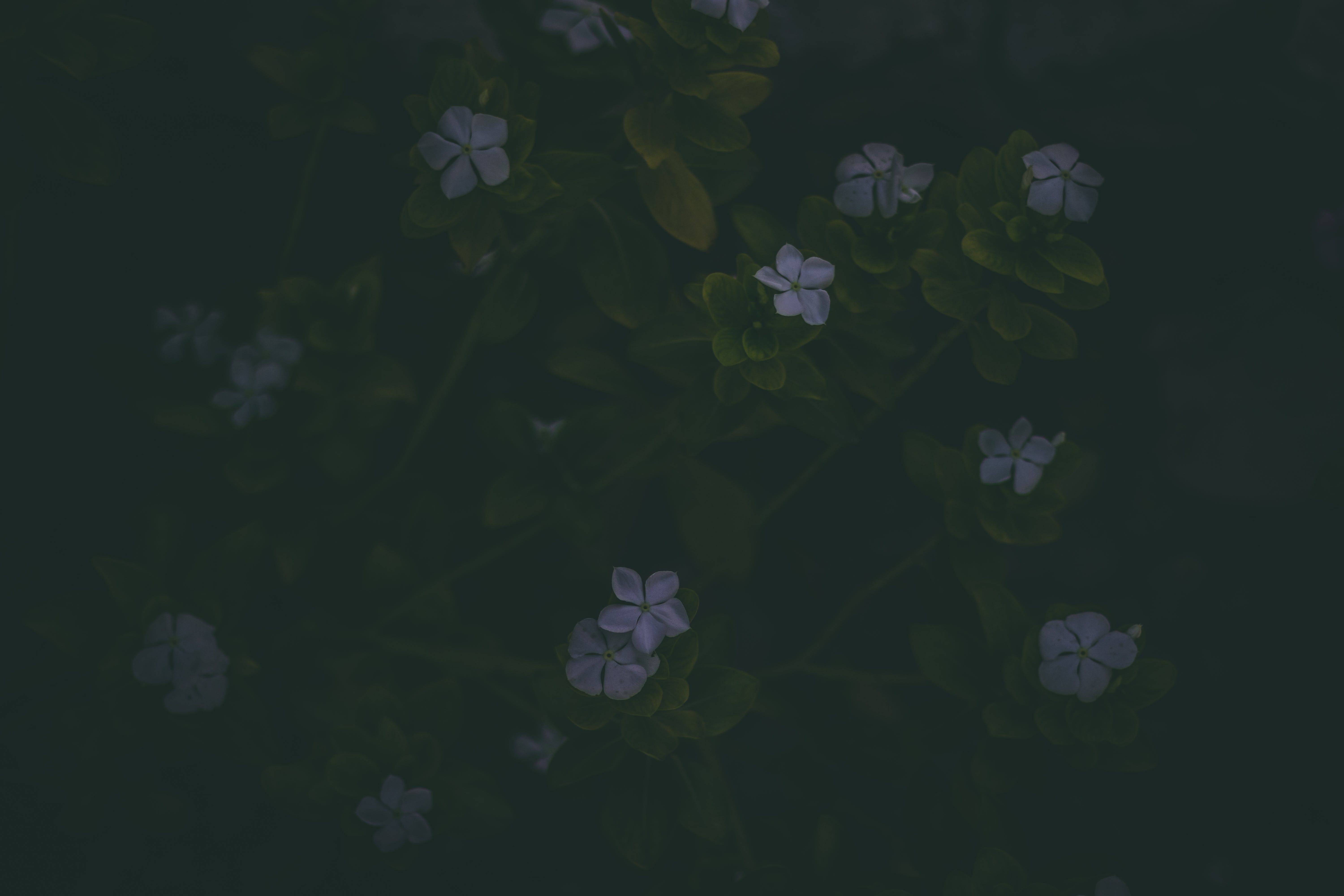 Small Purple Flowers With Green Stems