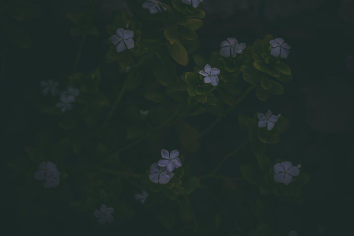 achtergrond, artistiek, bloemen