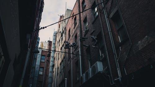 Δωρεάν στοκ φωτογραφιών με αρχιτεκτονική, αστικός, δρομάκι, ελαφρύς