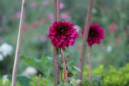 Základová fotografie zdarma na téma krásné květiny