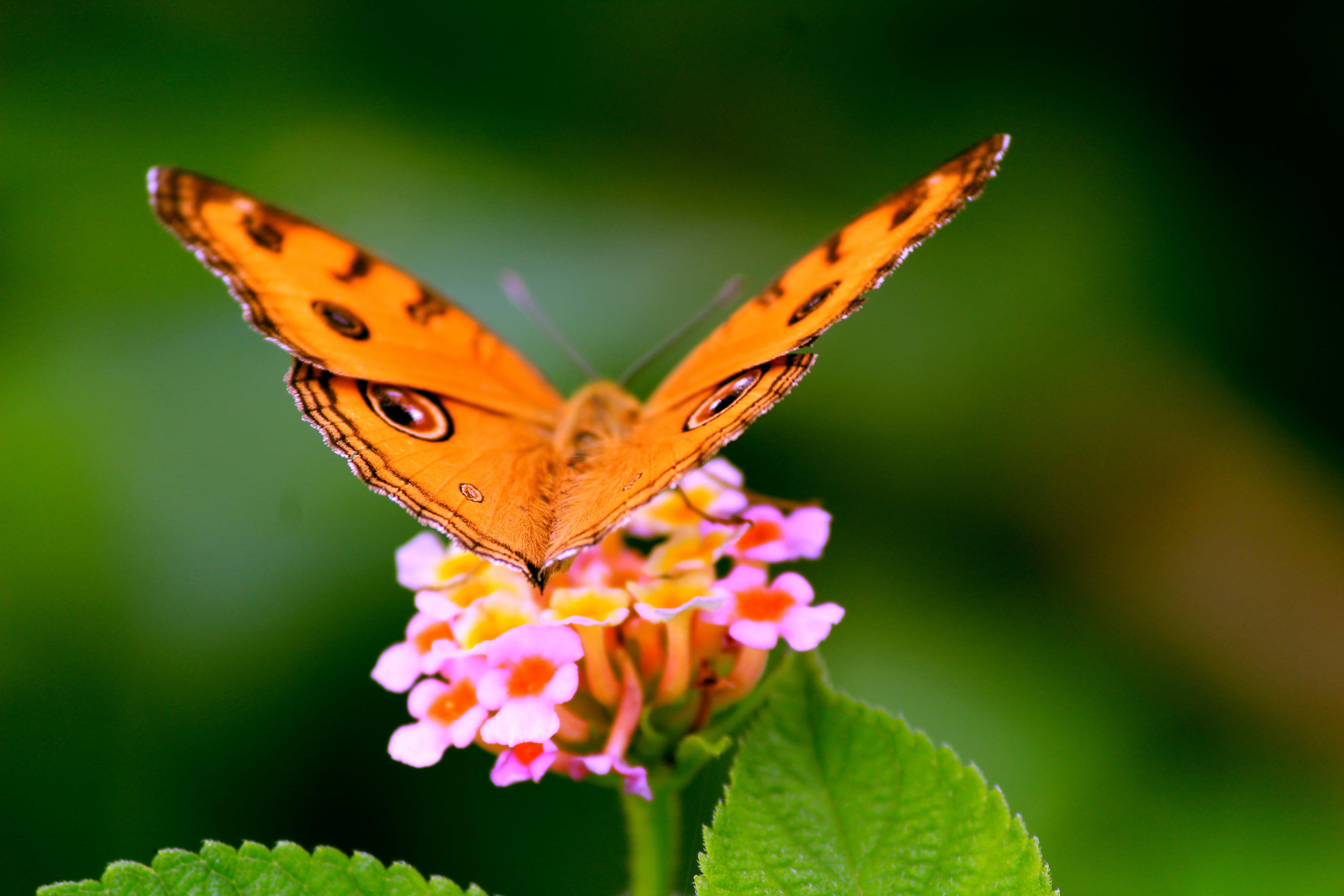 Gratis lagerfoto af blomst, close-up, delikat, farverig