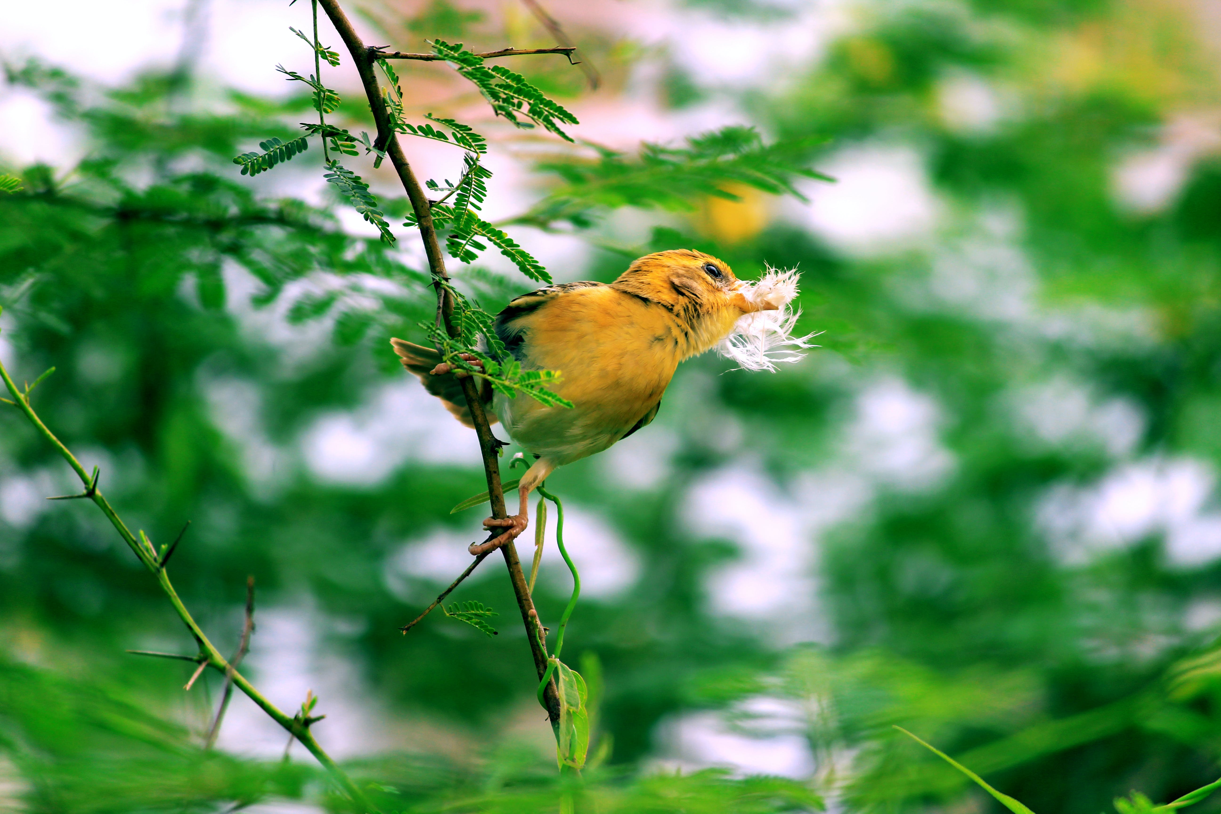 Yellow Bird Perched on Tree