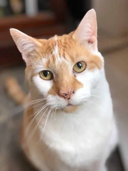 맹목적인 고양이의 무료 스톡 사진