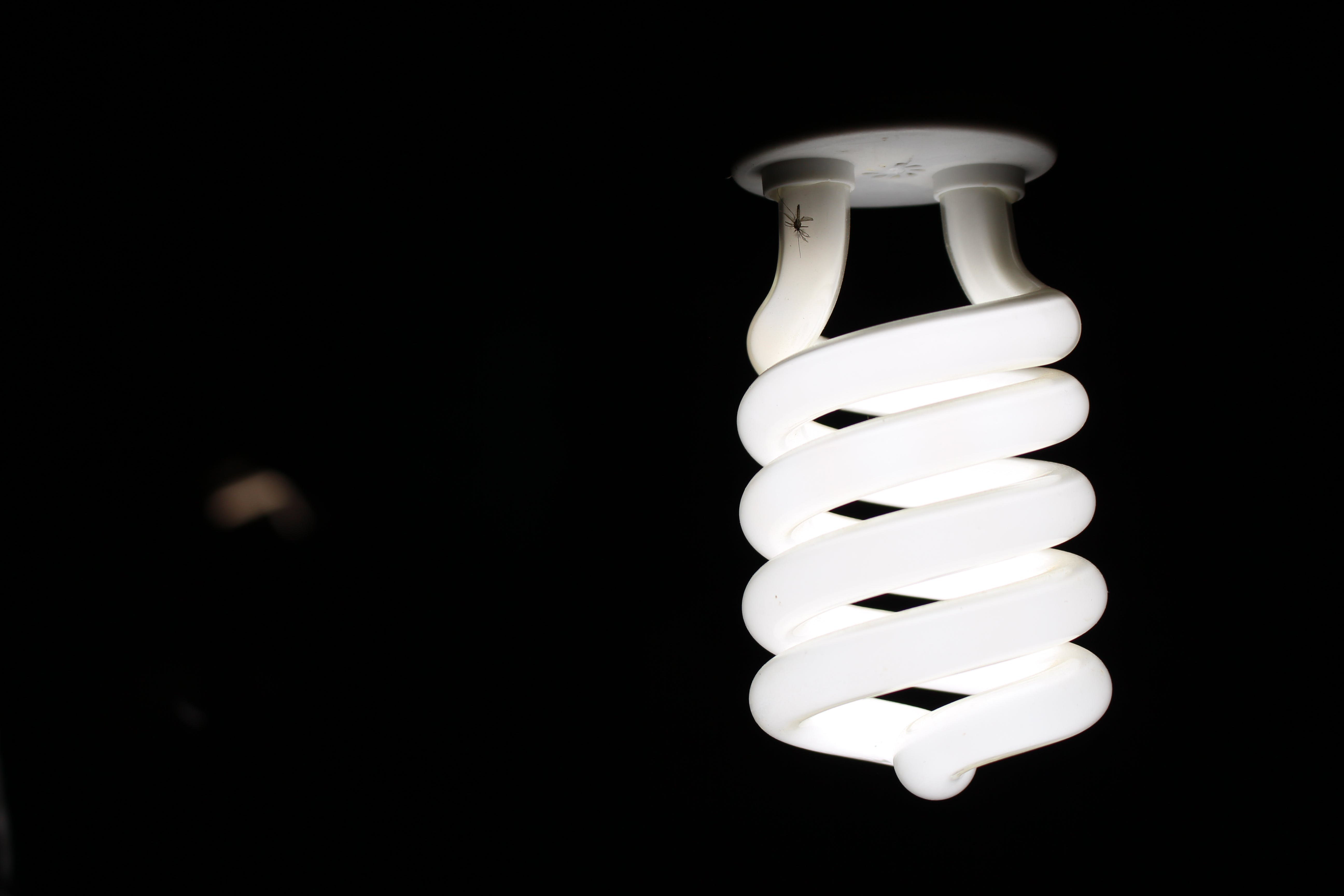 Close-Up Photography of Spiral Lightbulb