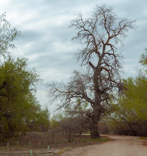 yaşlı ağaç içeren Ücretsiz stok fotoğraf