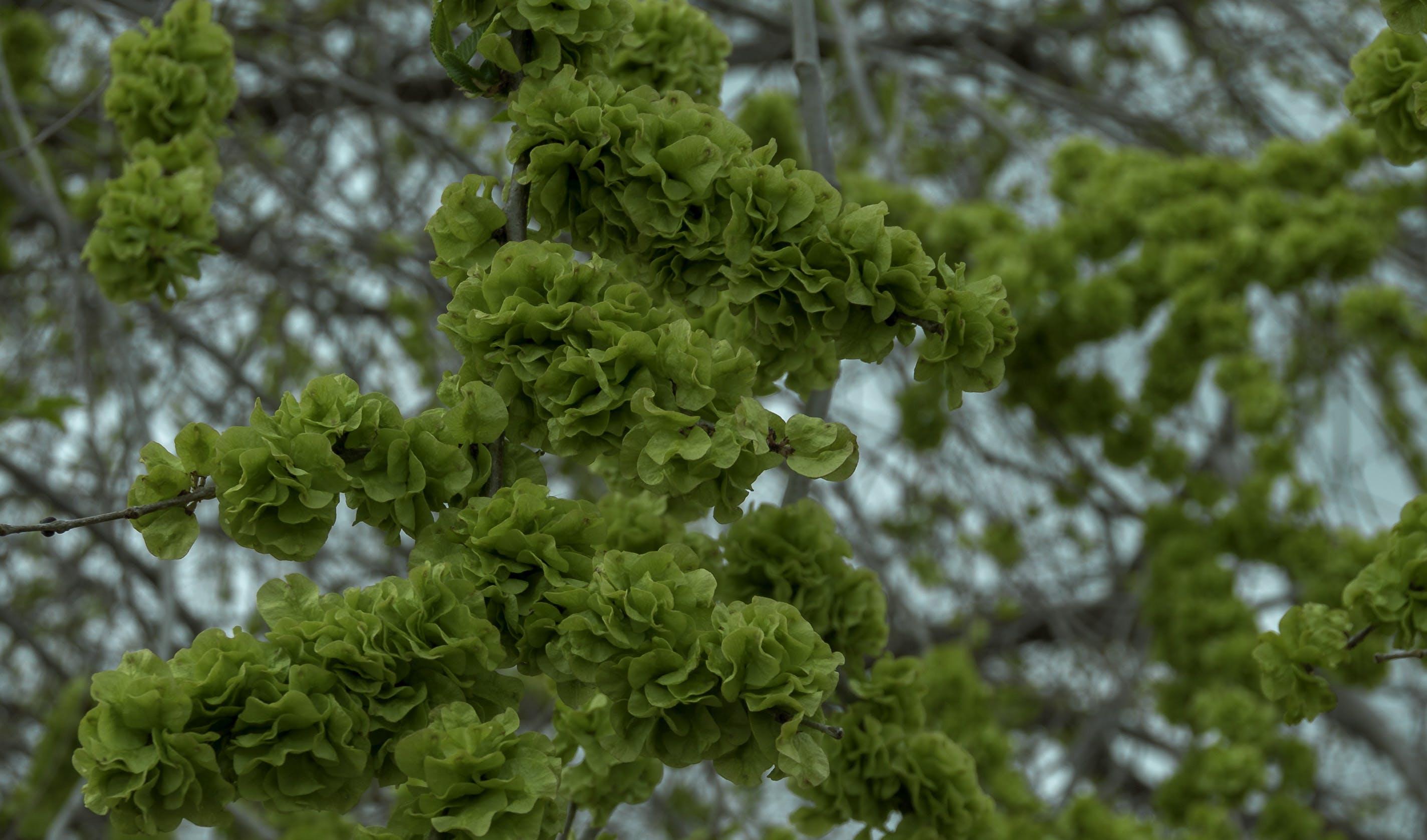Free stock photo of springtime