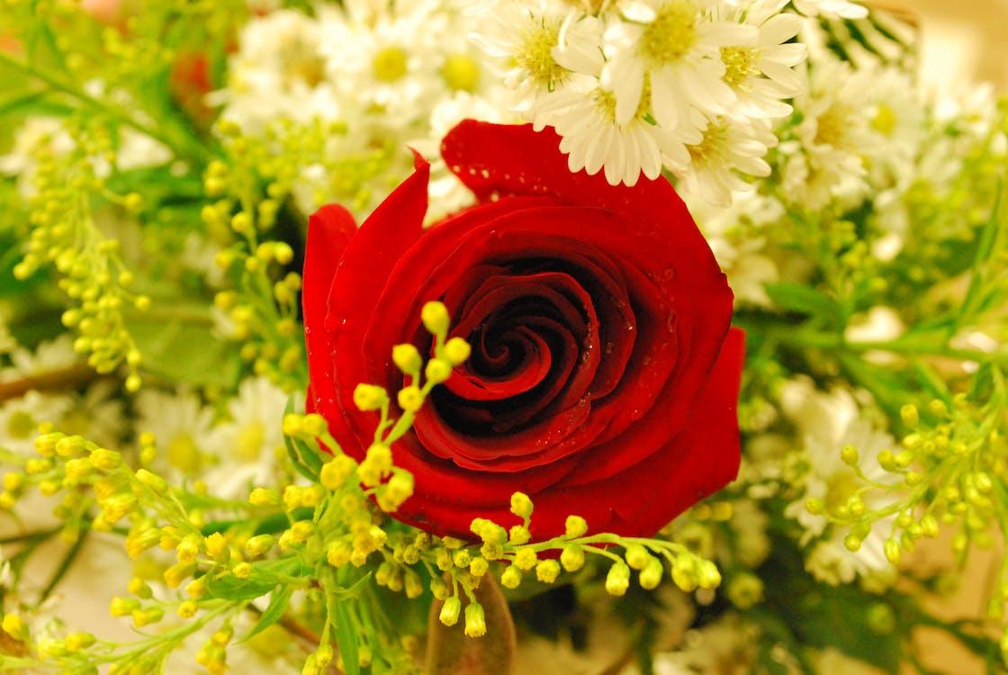 Rosas vermelhas Avulsas | Floricultura RJ  |Rosa Flor Vermelha