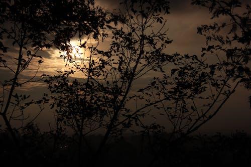 Free stock photo of árboles, Atardecer, landscape, landscape autumn