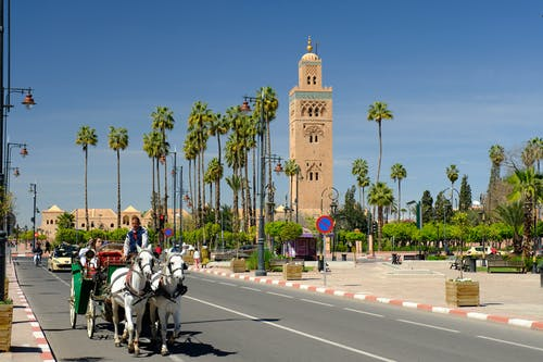 Free stock photo of carriage, grand mosque, marrakech, morocco