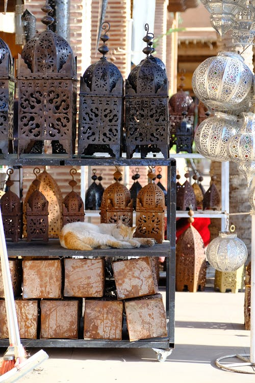 Free stock photo of cat, market, marrakech, morocco