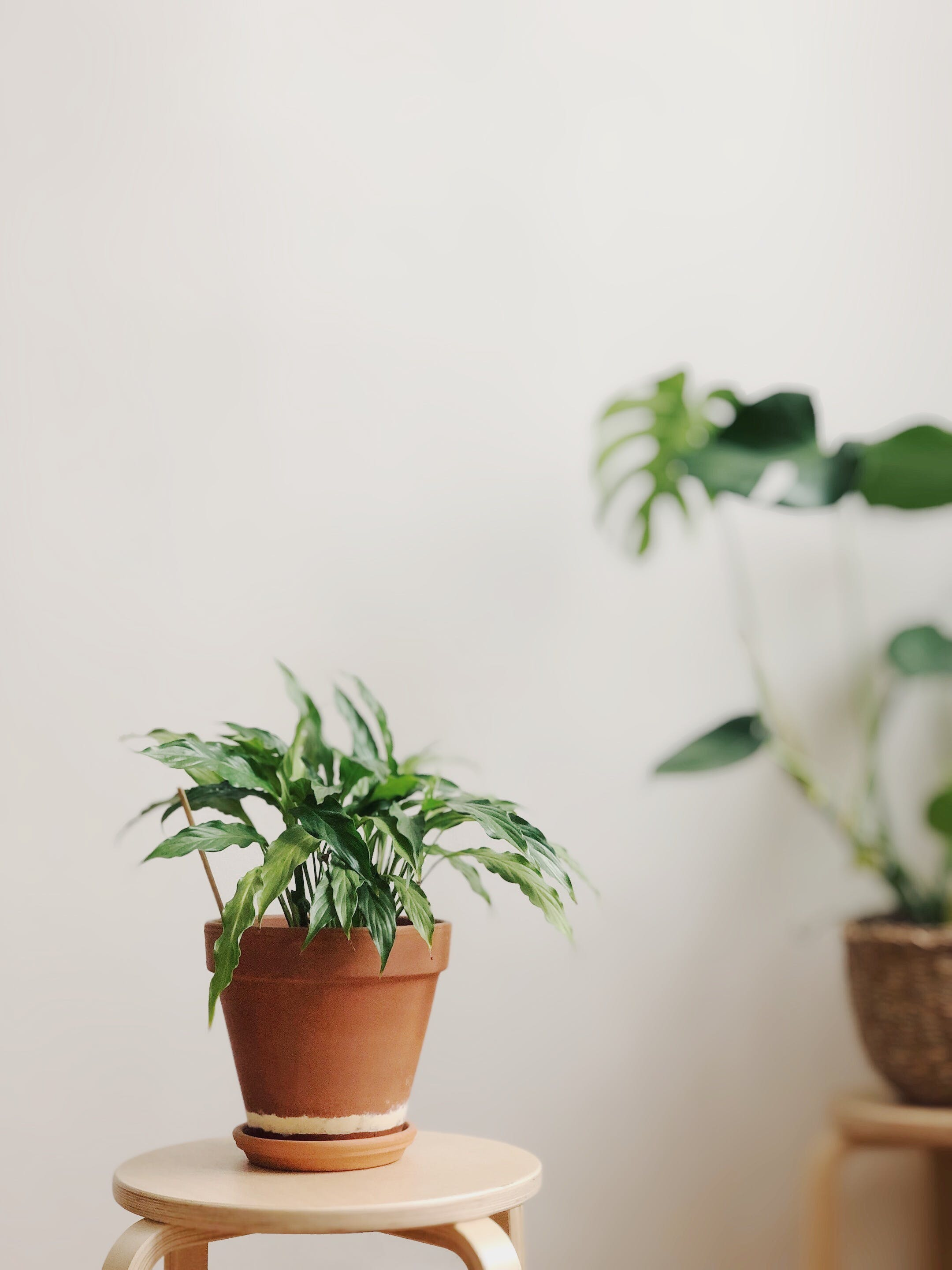 Selective Focus Photography of Potted Plant