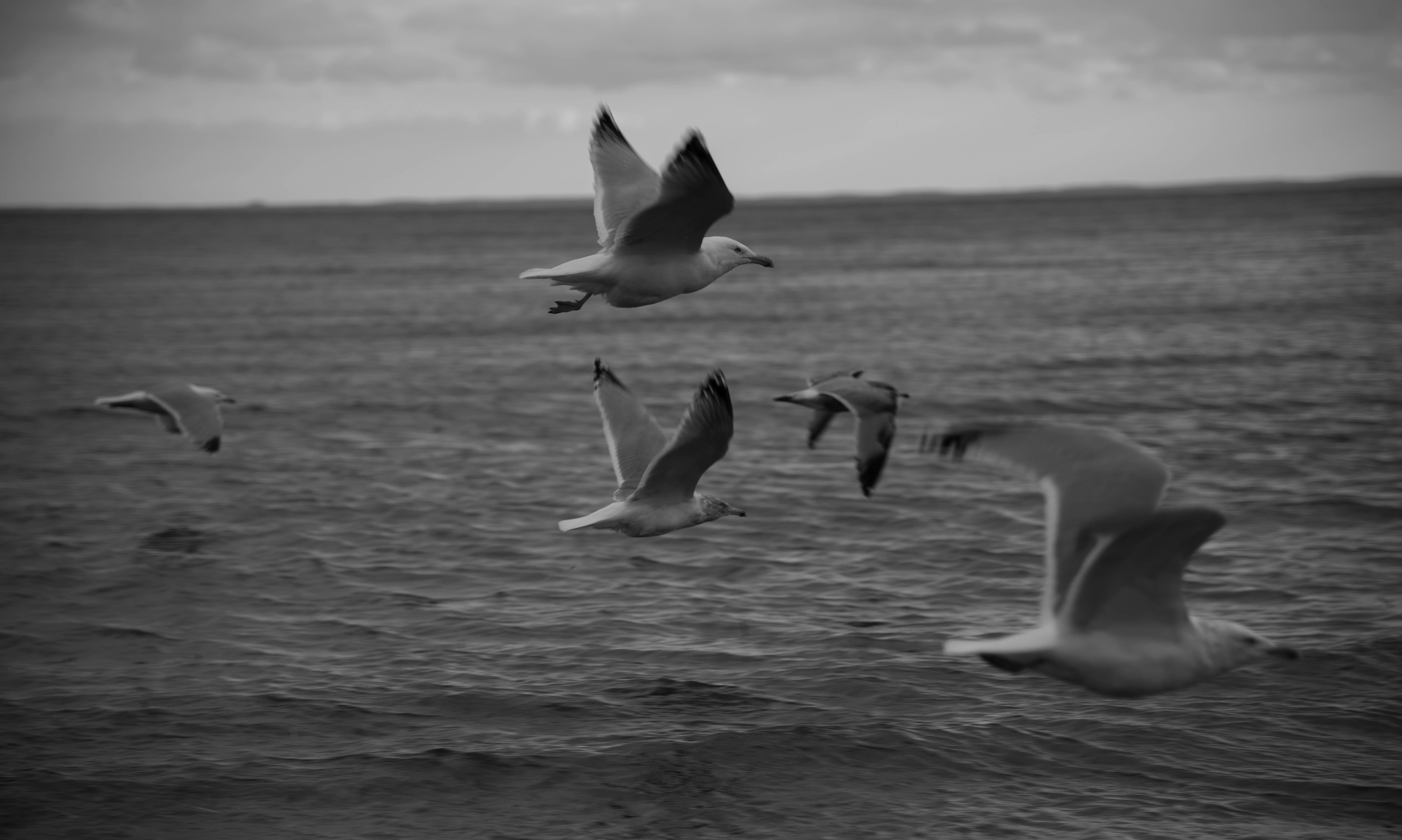 Free stock photo of beach, birds, evening beach, flock