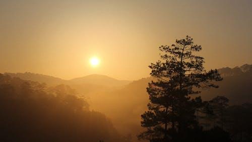 ベトナム, 夜明け, 平和的, 森林の無料の写真素材