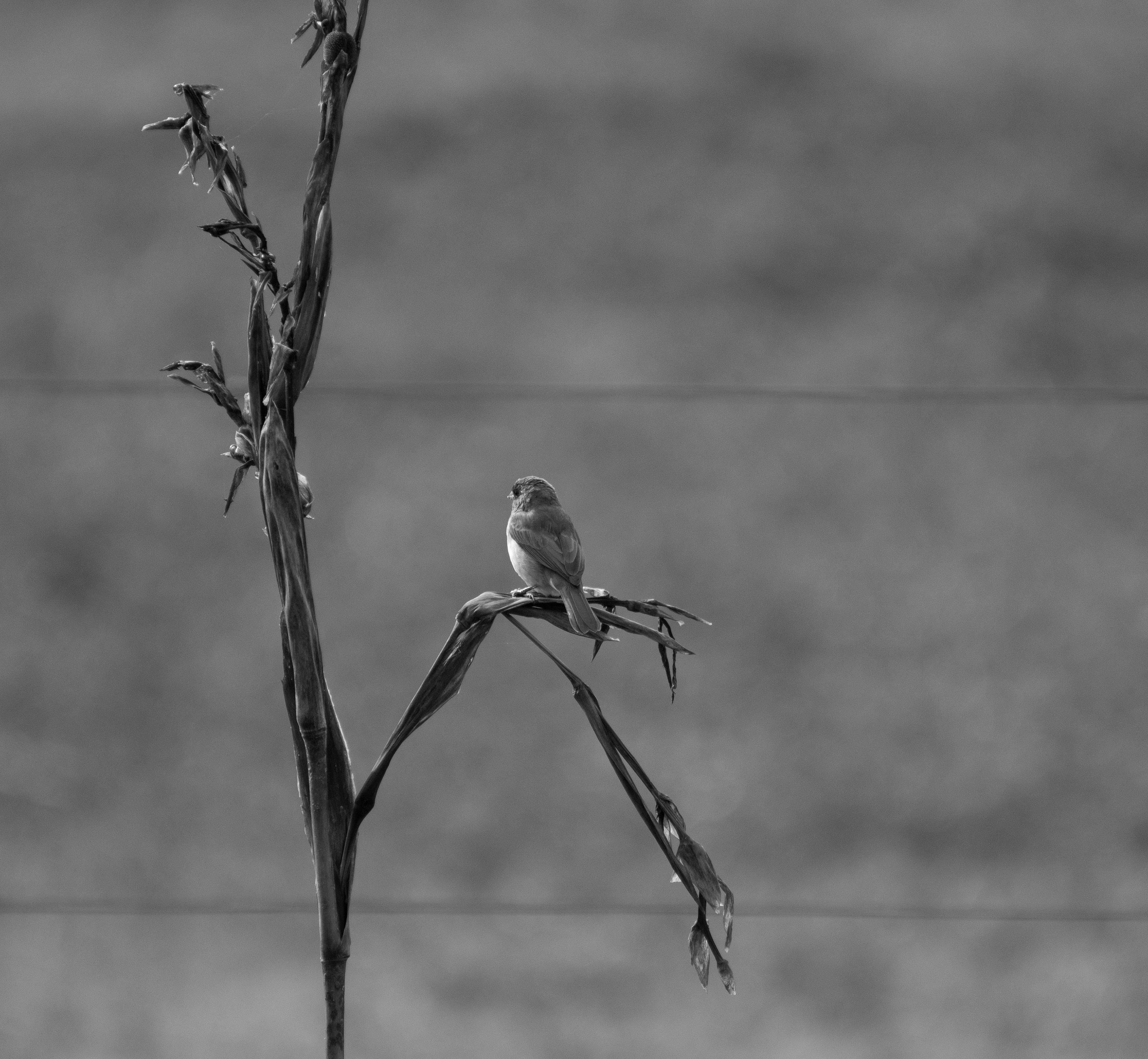 Free stock photo of bird, black and white, black and-white, thinking