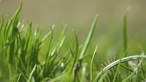 Free stock photo of grass, green, macro, meadow