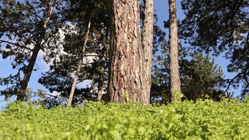 Free stock photo of meadow, nature, tree, trees