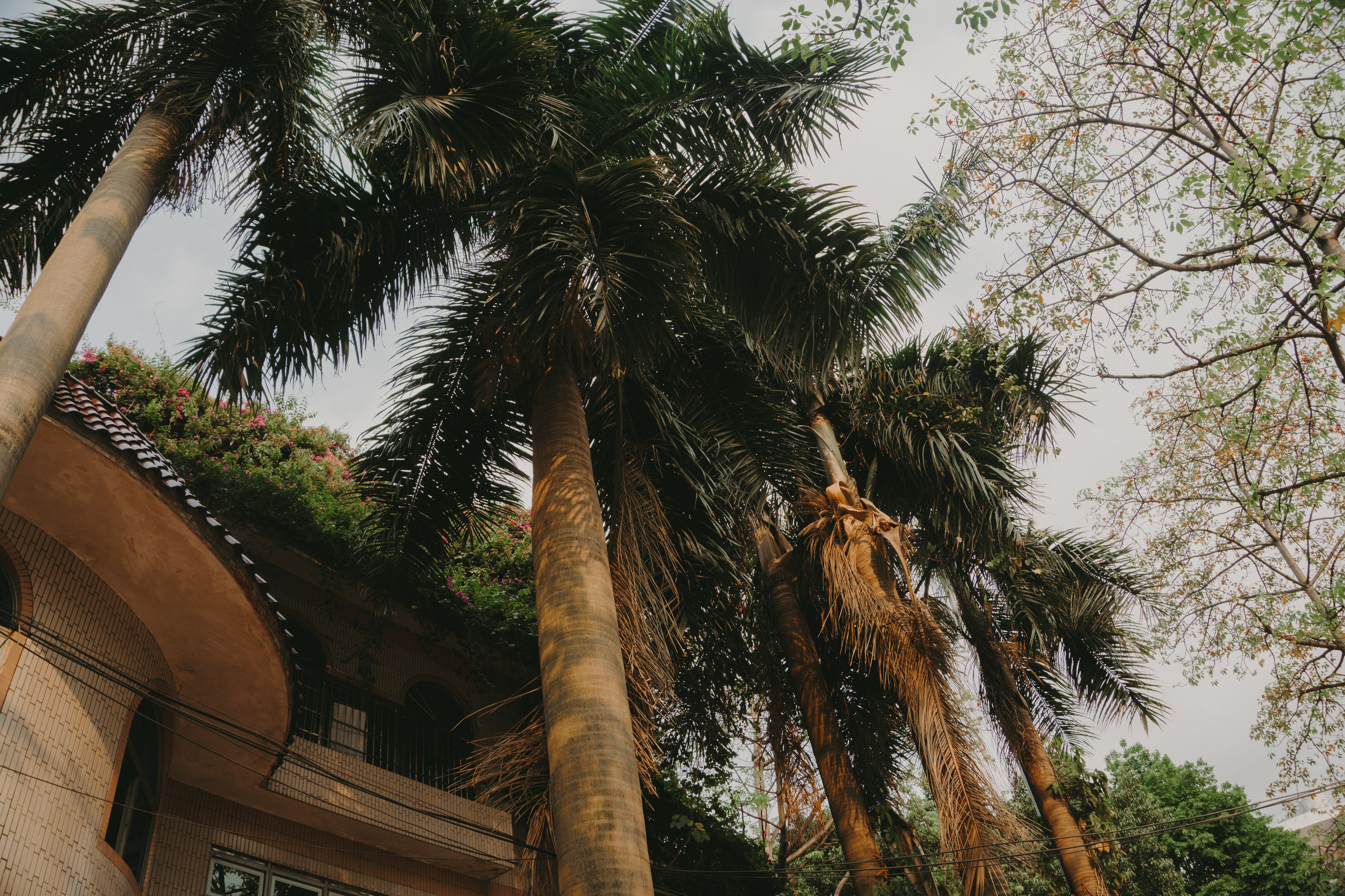 Palm Trees Under Gray Skies