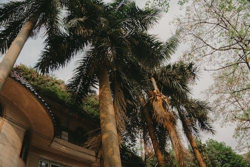 Immagine gratuita di albero, architettura, articoli di vetro, atmosferico
