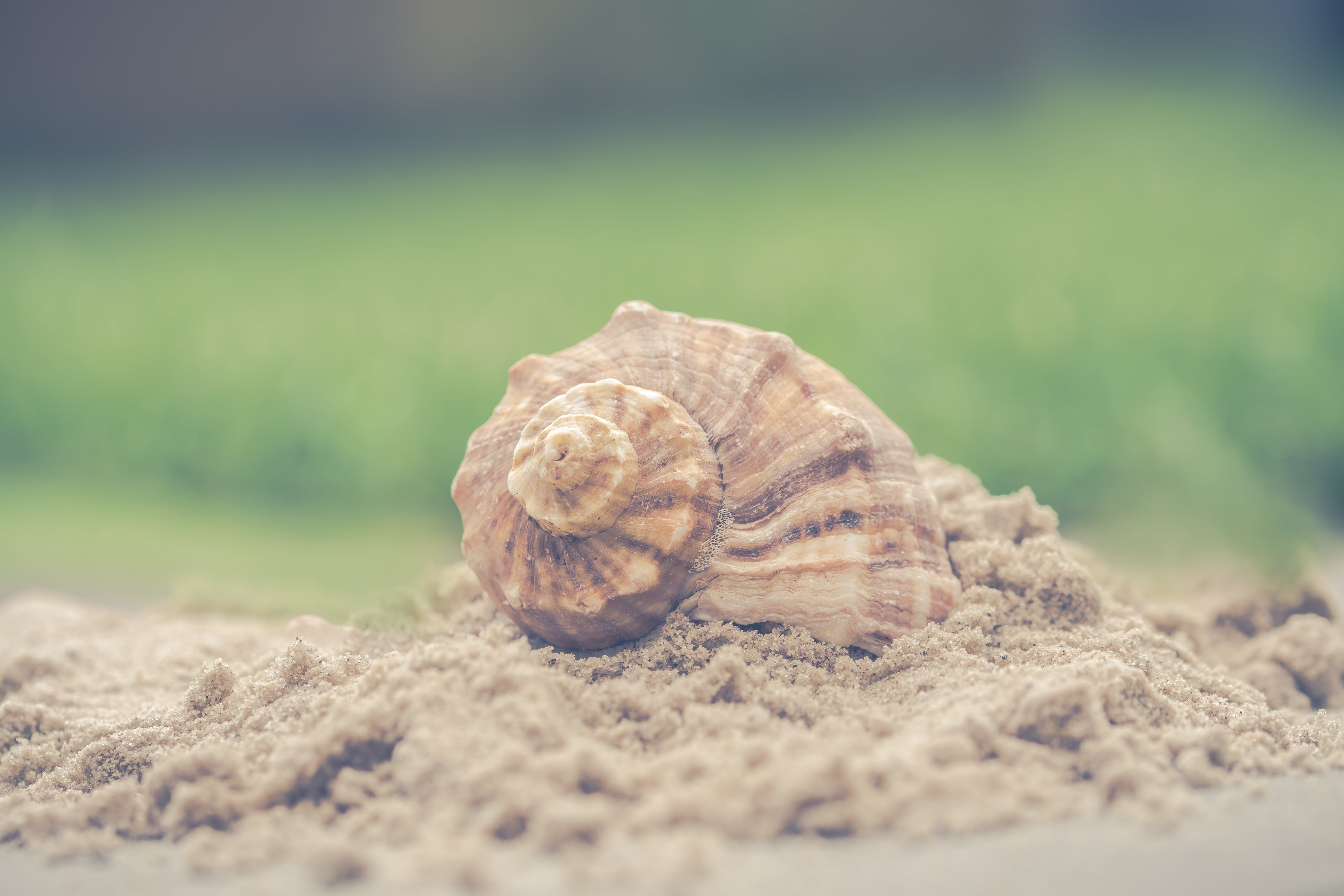 Macro Photography of Shell on Sand