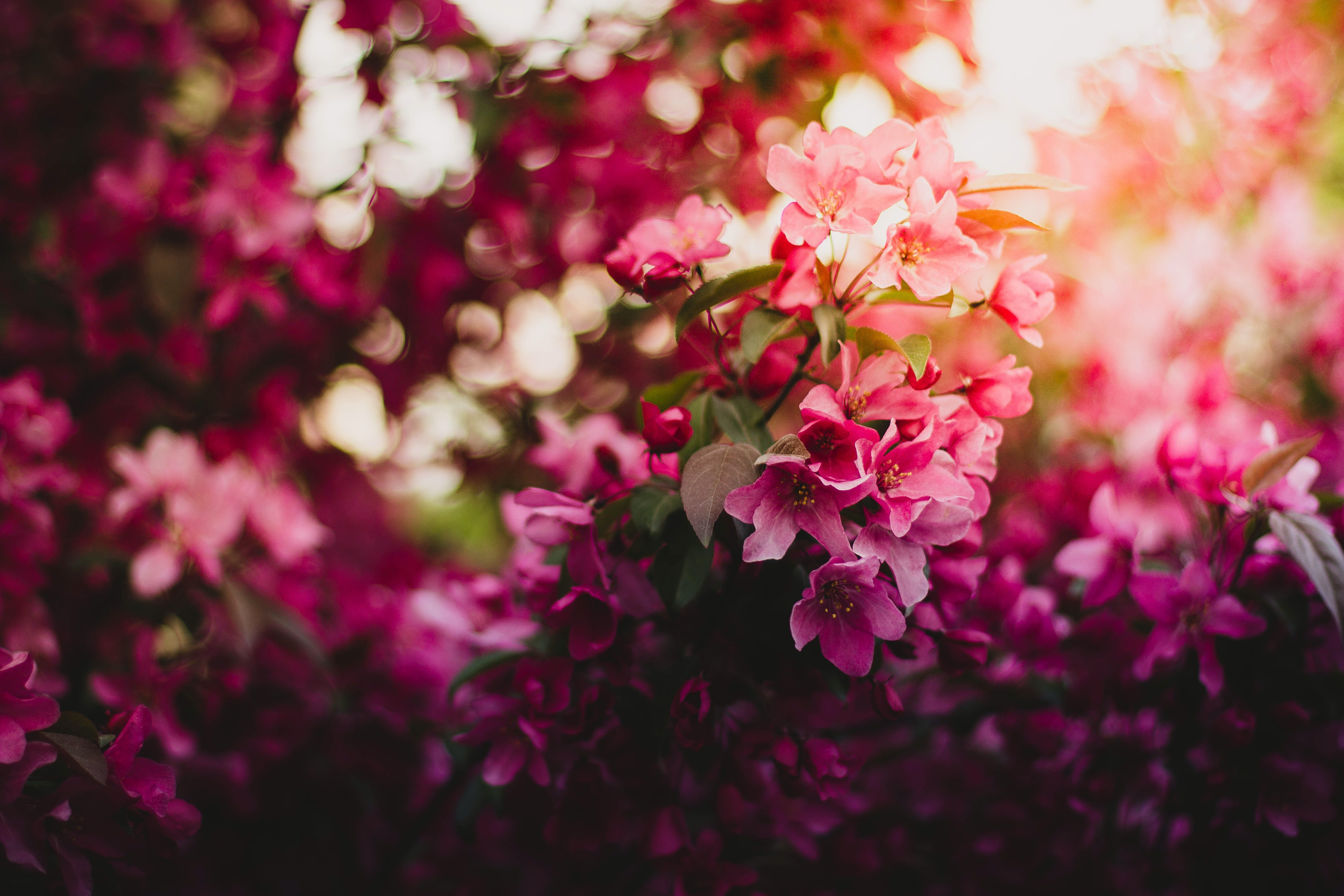 Pink Green And Purple Flowers During Daytime Free Stock Photo