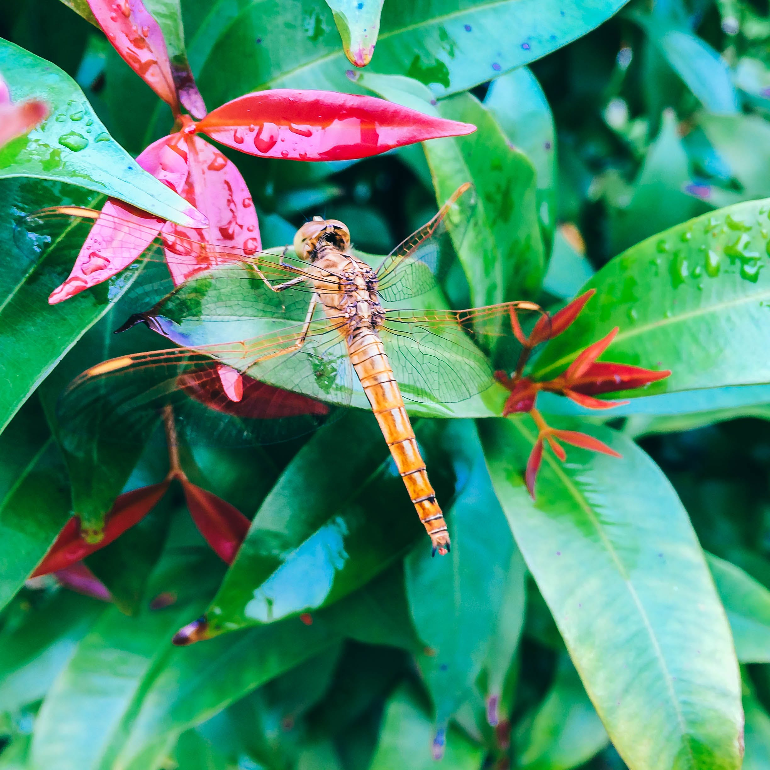 Free stock photo of animal, dragonfly, green, insect