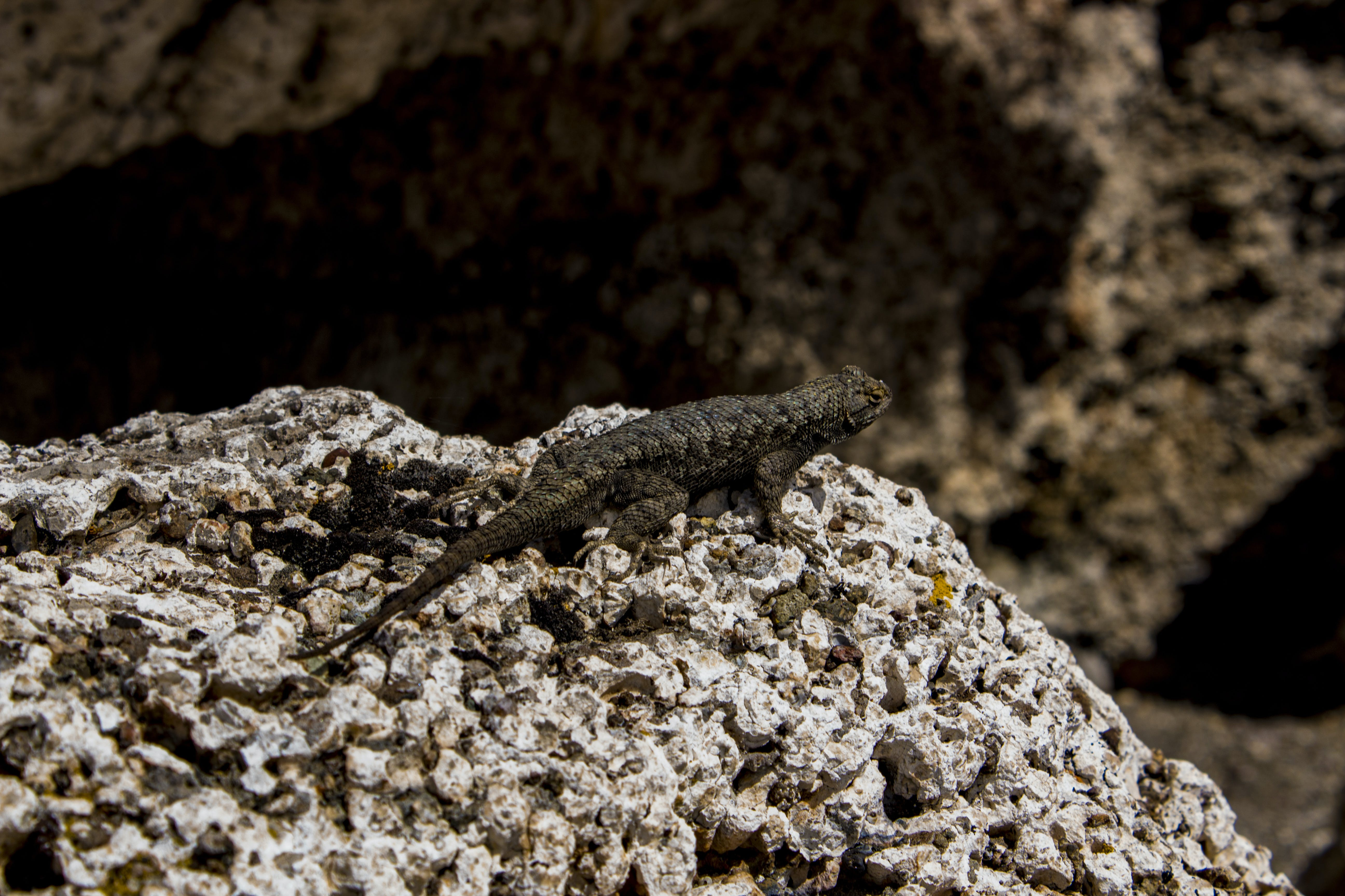 Close-Up Photography of Lizard On Stone