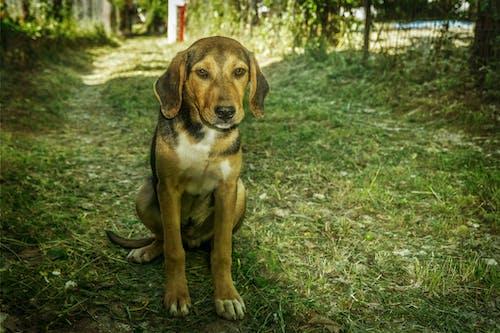 Gratis lagerfoto af dyr, hund, kæledyr, landsbylivet