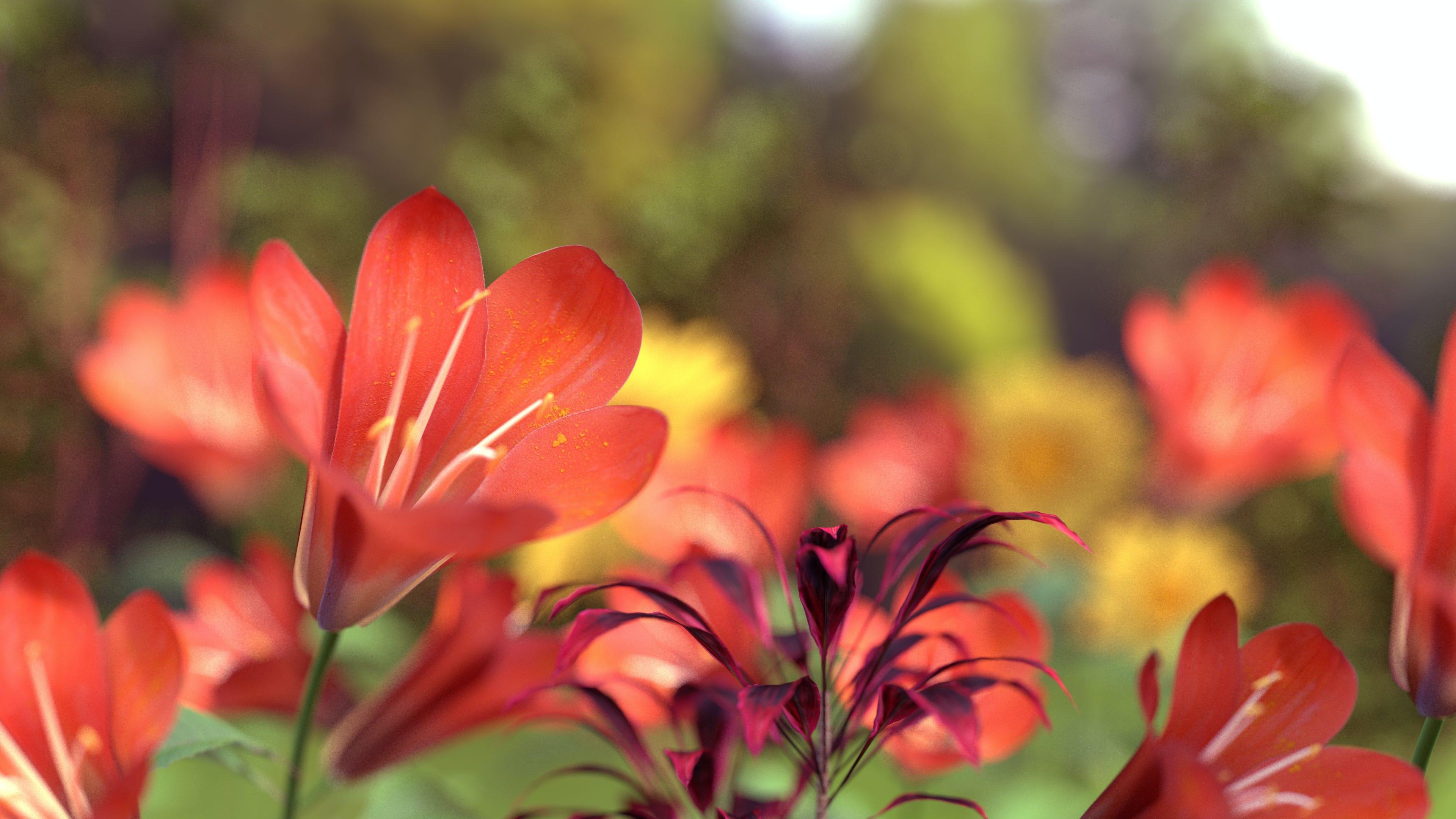 天性, 漂亮, 紅色的花朵, 花 的 免费素材照片