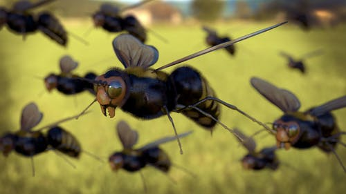 Free stock photo of bee, flying, honeybee
