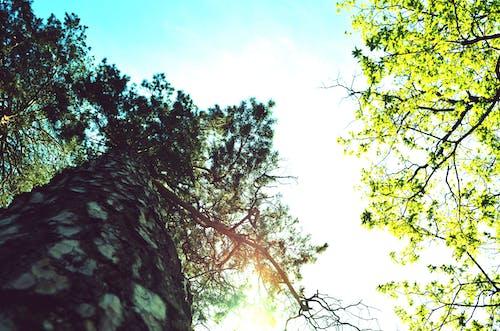木, 森林, 空の無料の写真素材
