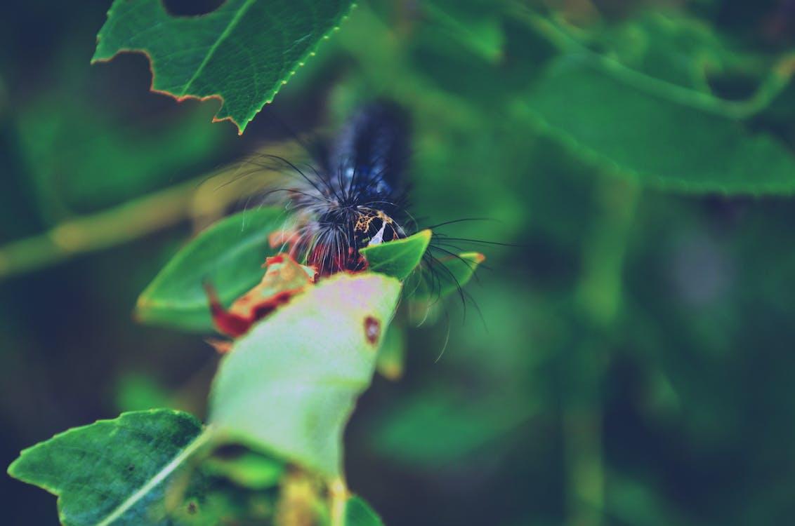 毛虫の無料の写真素材