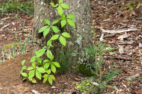 Бесплатное стоковое фото с грязь, дерево, деревья, завод