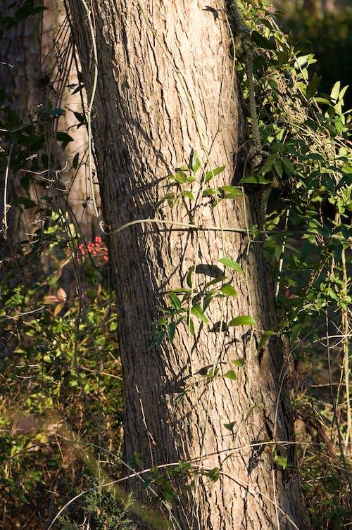 Бесплатное стоковое фото с дерево, деревья, зеленый, красный