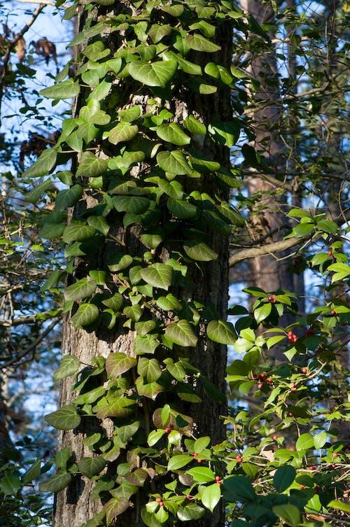 Бесплатное стоковое фото с голубой, дерево, деревья, зеленый