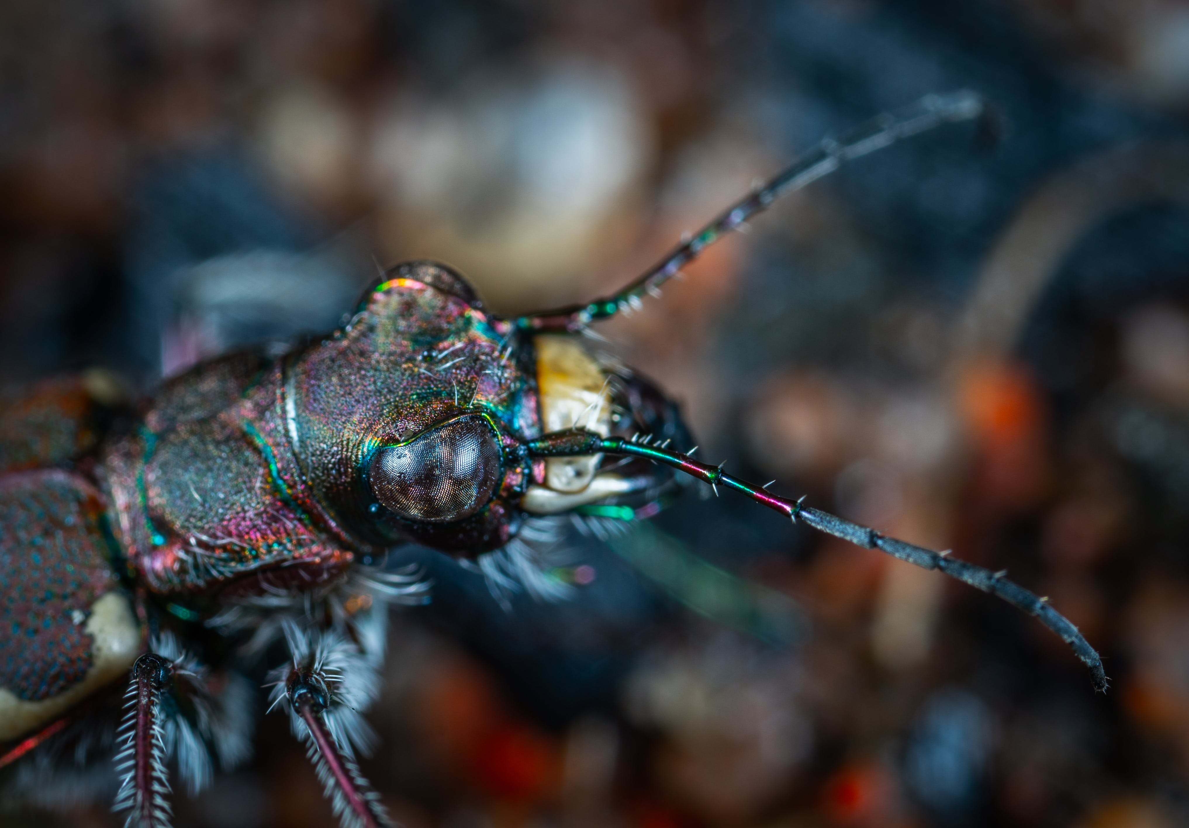 Shallow Focus Photography of Black Insect