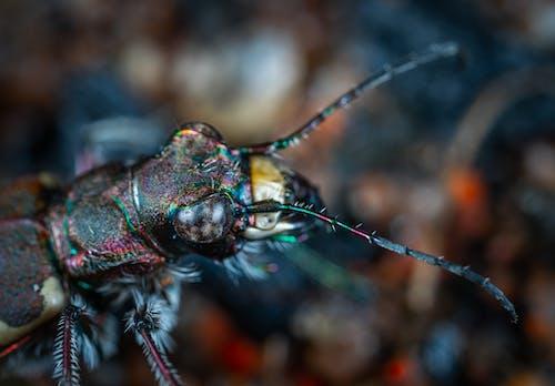 Ảnh lưu trữ miễn phí về ăng ten, bọ cánh cứng, bộ sưu tập, cận cảnh