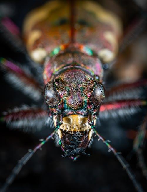 Foto d'estoc gratuïta de animal, beetle, bitxo, color