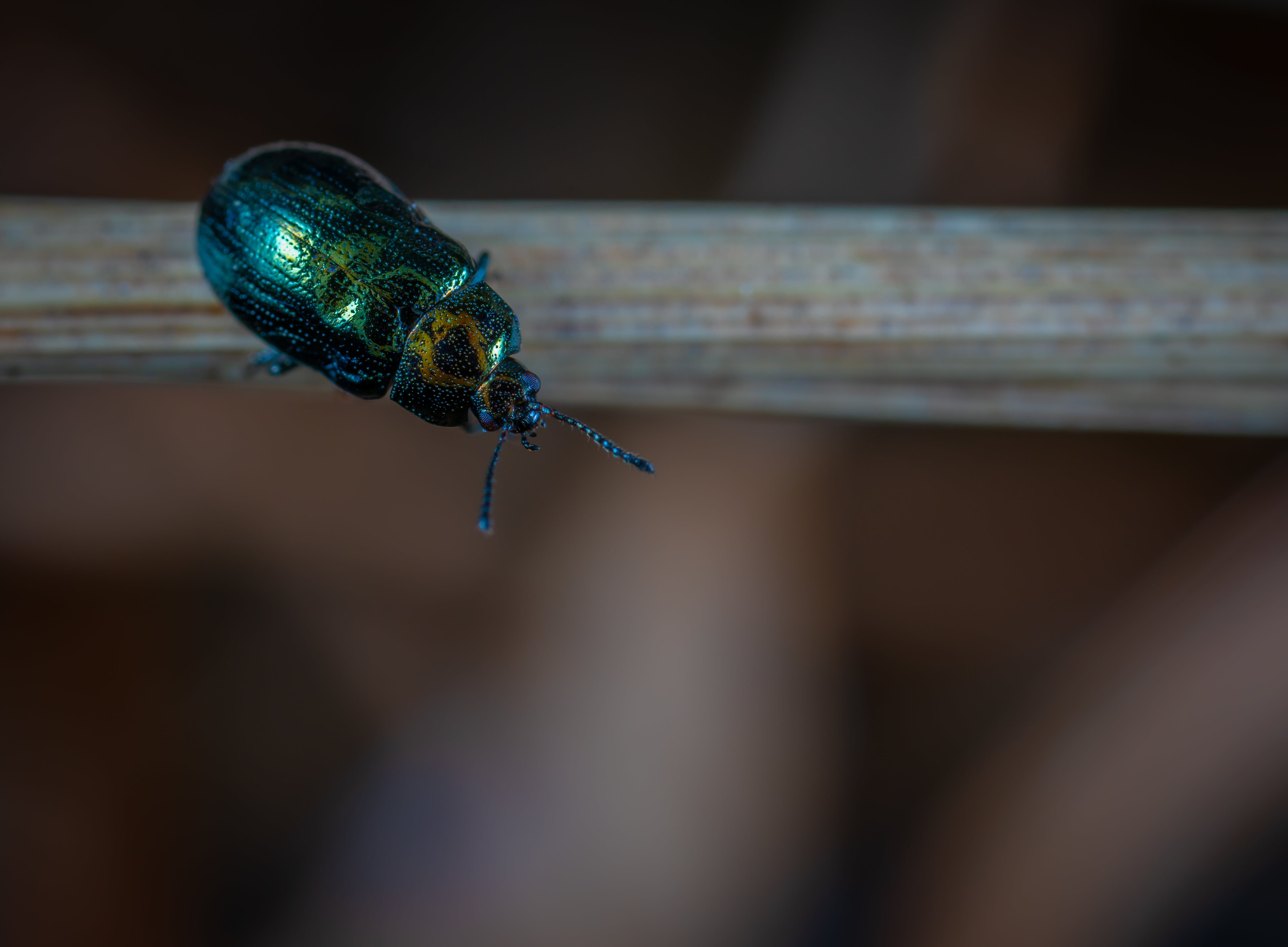 Close Up Photo of Green Beetle
