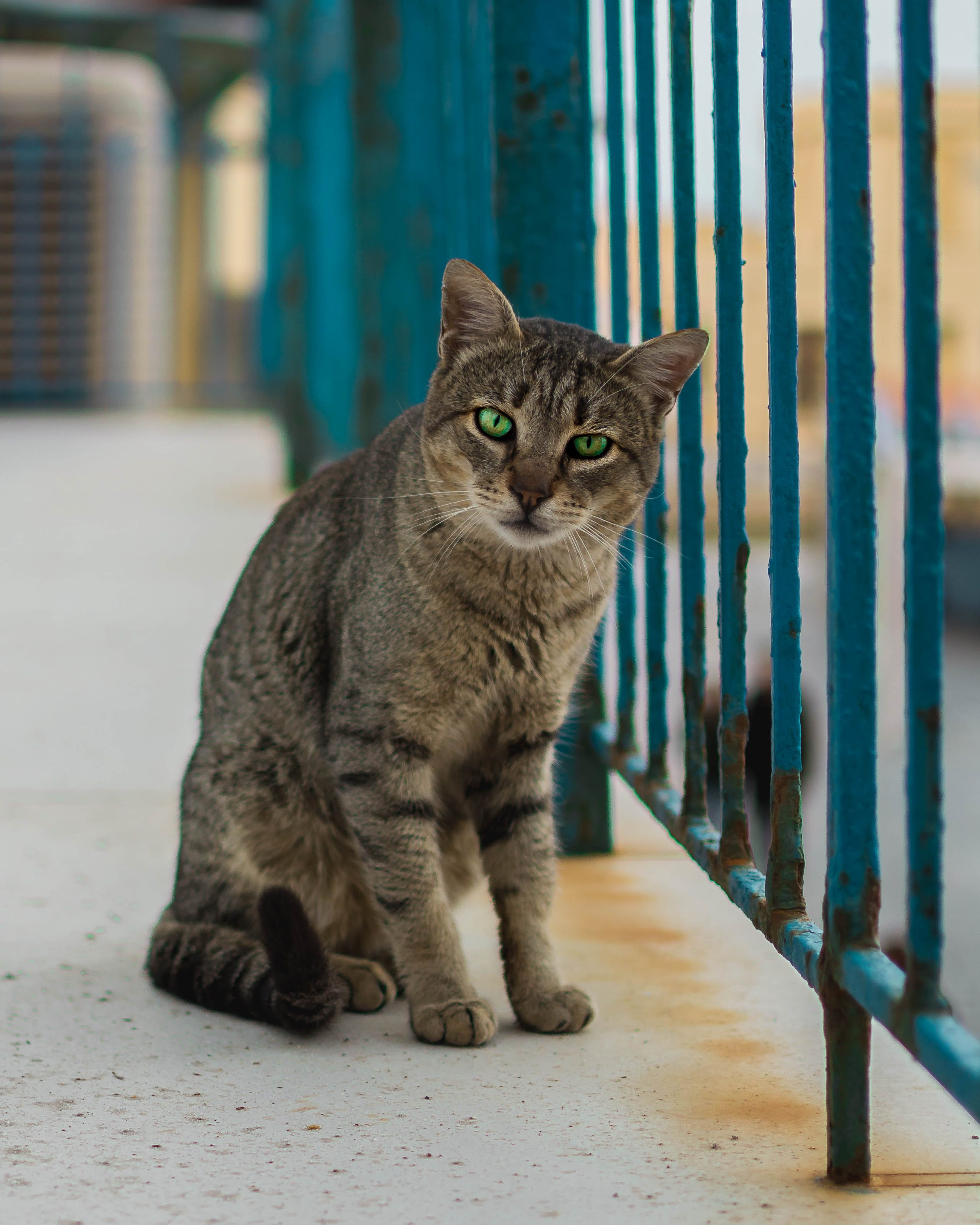 Free stock photo of animal, cat, cat's eyes, eyes