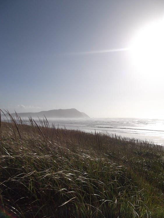 ακτή, γρασίδι, θάλασσα