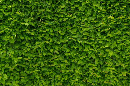 Free stock photo of nature, red, pattern, wall