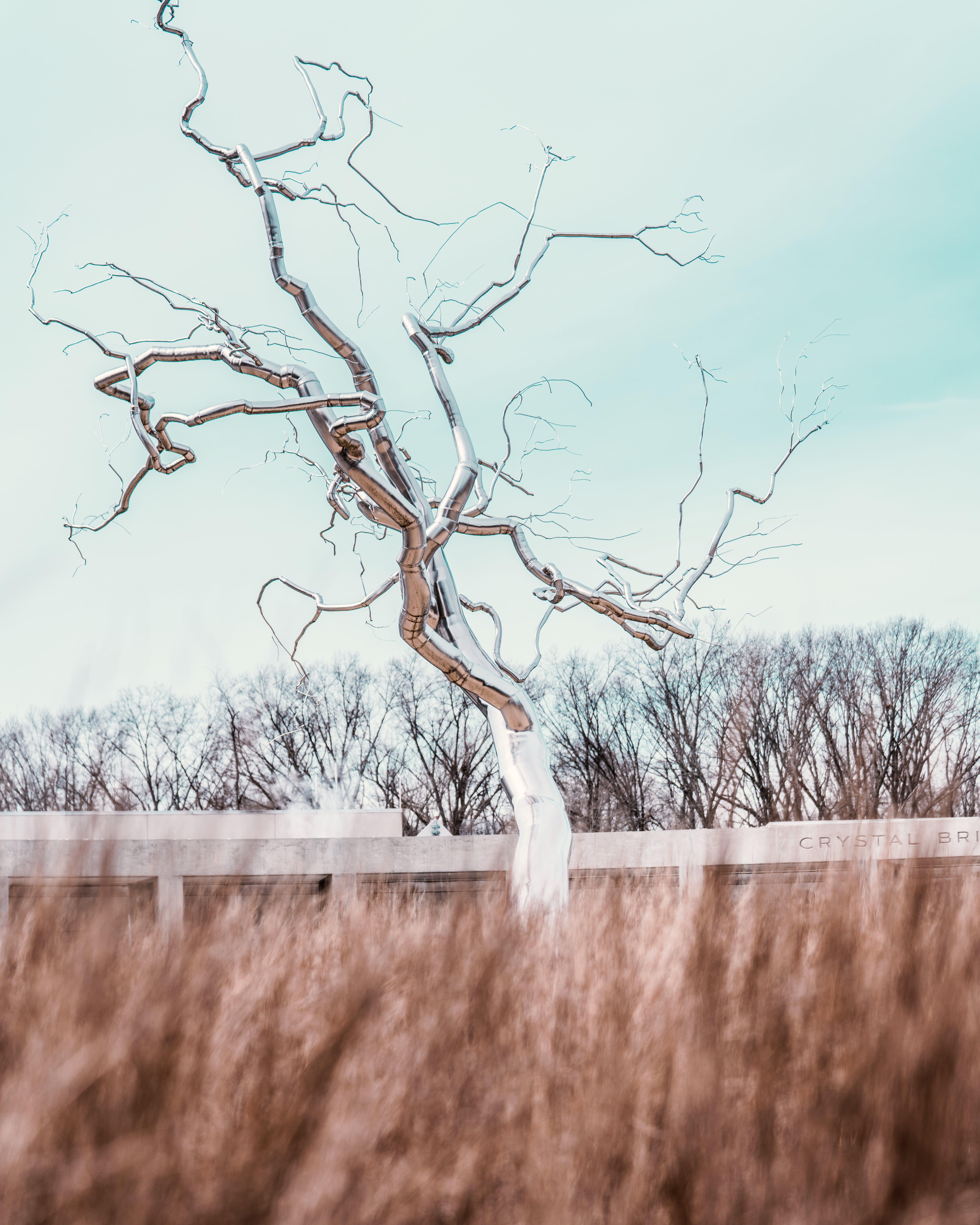冬季, 冷, 分支機構, 原本 的 免费素材照片
