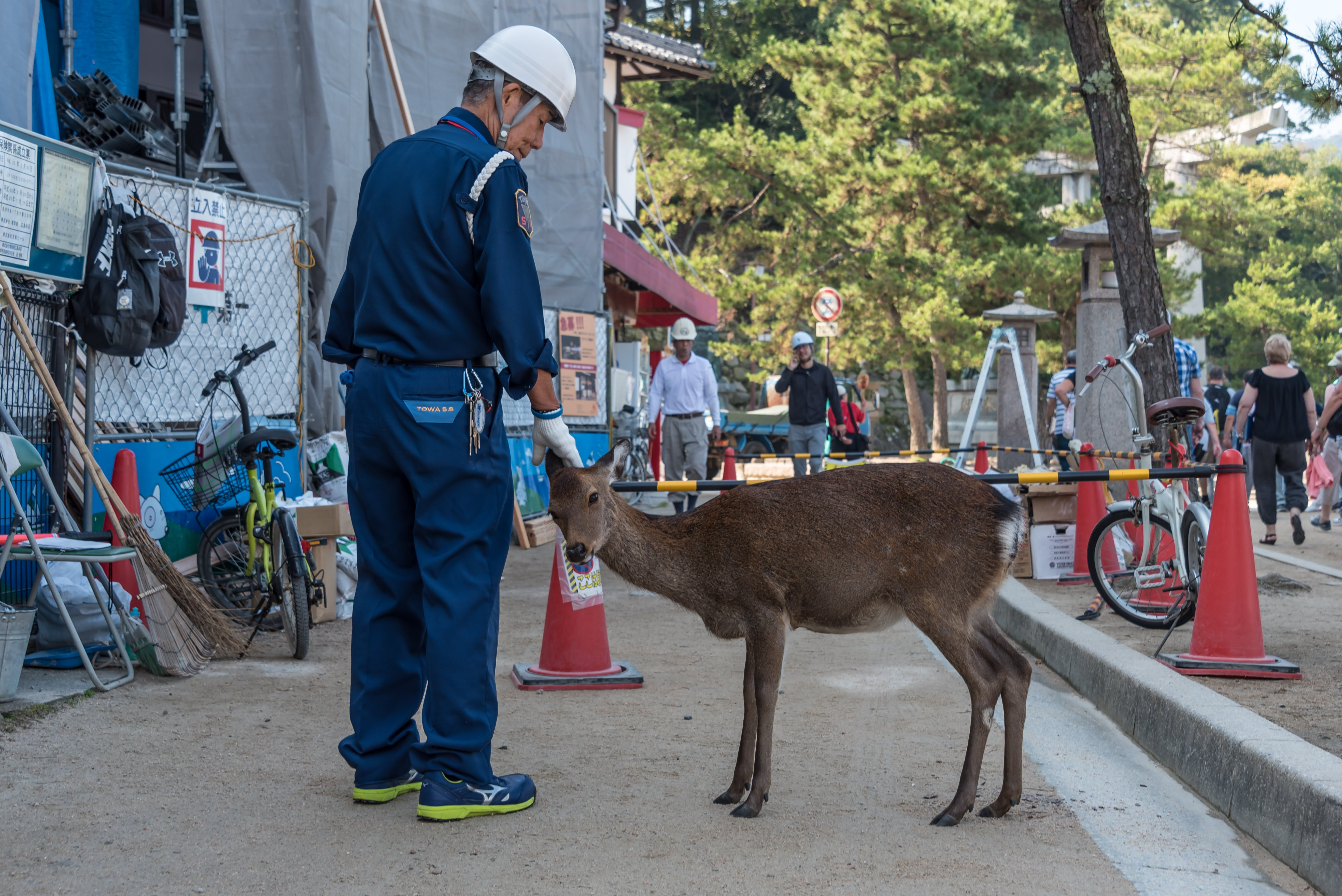 Free stock photo of #deer and worker