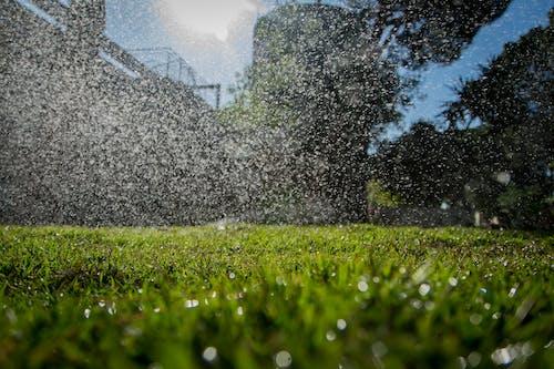 Безкоштовне стокове фото на тему «бризки, трава»