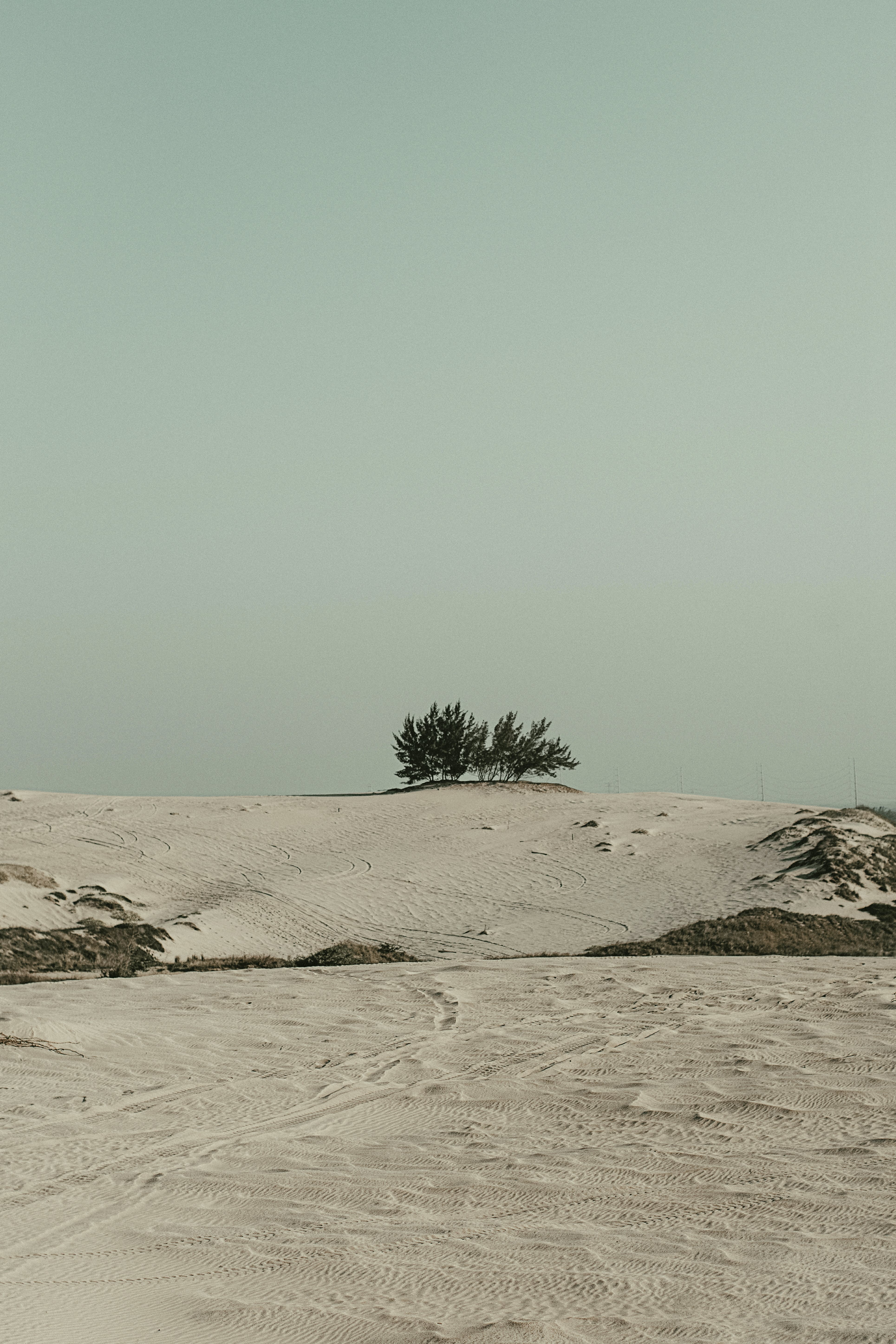 White Sand and Green Tree