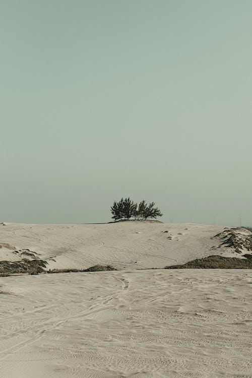 Ilmainen kuvapankkikuva tunnisteilla aamu, aamunkoitto, aavikko, autiomaa